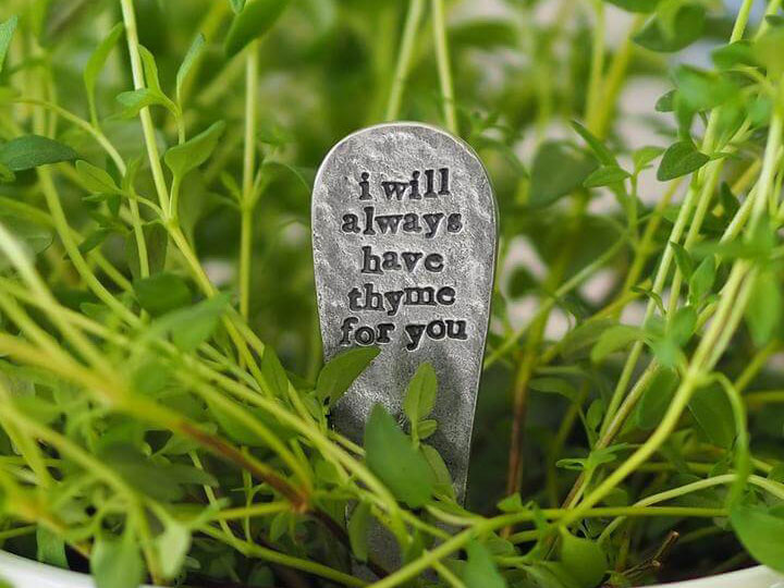Thyme plant with plant marker displayed in it